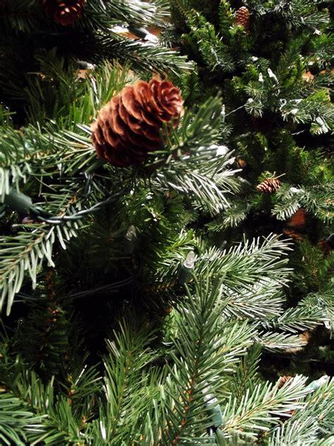pre lit douglas fir tree douglas fir tree legrue s gallery denver co