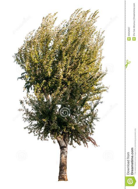 tree on white tree on white background royalty free stock photography