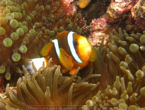 5-clownfish-1333-c1-great-barrier-reef.jpg