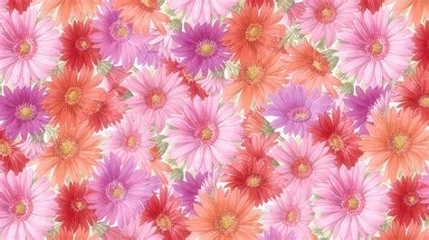 flower images flowers wallpapers hd wallpapersafari
