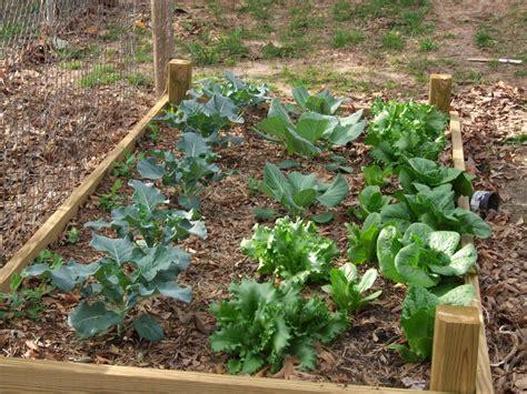 home vegetable garden design home vegetable garden design home vegetable garden design