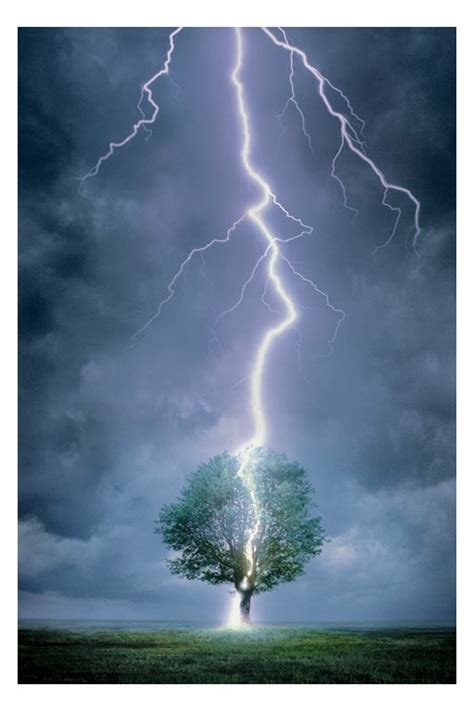 lighting in trees interesting facts about lightning