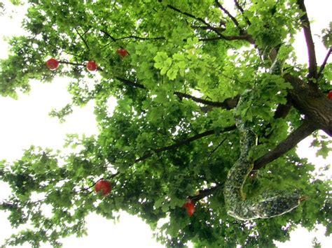 Garten Baum Der Erkenntnis by Bei Mir Im Garten Steht Ein Quot Baum Der Erkenntnis