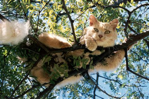 tree with cats how to get a cat from a tree corner