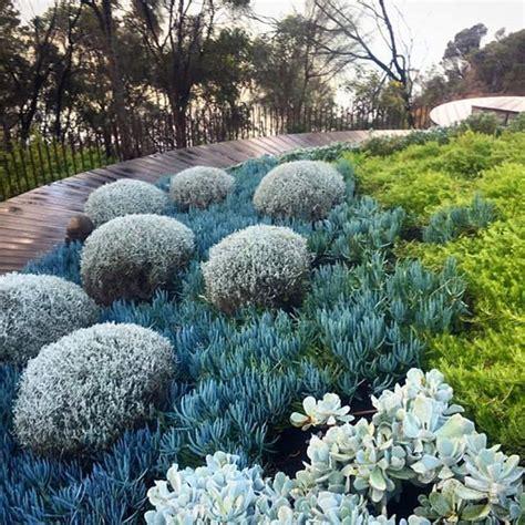 australian garden design ideas 25 beautiful coastal gardens ideas on coastal