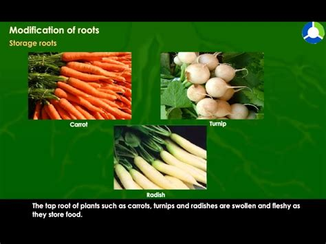 Modification Of Root by Modification Of Roots