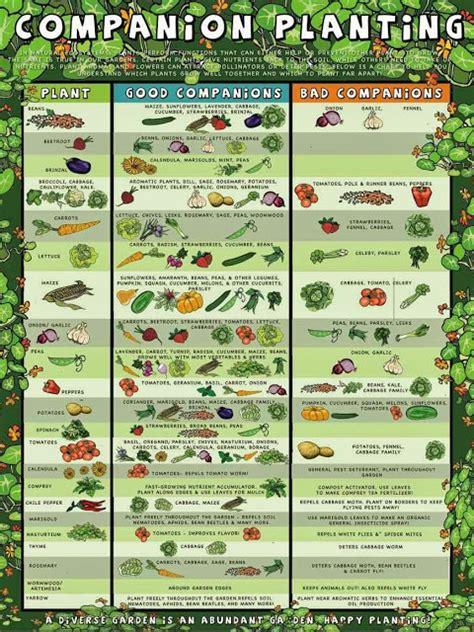 companion flowers for vegetable garden southern california garden guide basic gardening easy