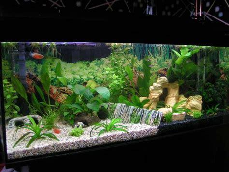 aquarium decoration ideas freshwater best fish tank ideas for pet about pet