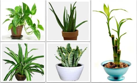 the best indoor plants the best indoor plants that reduce stress purify the air