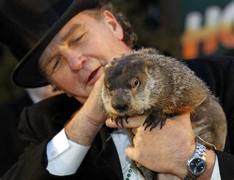 groundhog day 2015 from a complaint letter to punxsutawney phil the