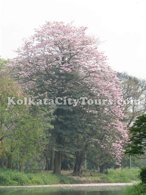 botanical gardens at shibpur kolkata sightseeing