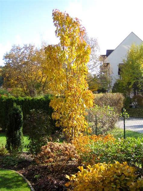 Im Garten Wuchs Der Baum by Ersatz F 252 R Korkenzieherweide Page 3 Mein Sch 246 Ner