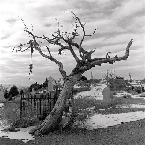 tree hangings hanging tree photograph by harry snowden
