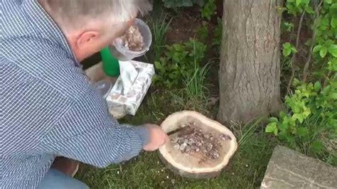 Pilze Im Garten Züchten by Pilze Im Garten Z 252 Chten Baumstamm Scheibenimpfmethode