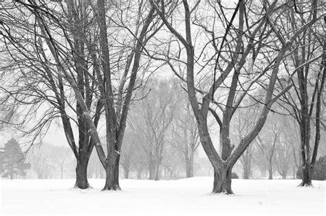 winter trees gustavo toledo photography winter trees 2011 how i