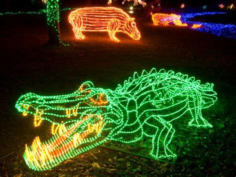 portland zoo lights get a dose of with zoo lights drive