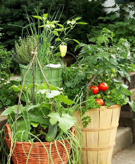growing vegetable garden growing vegetables in pots starting a container