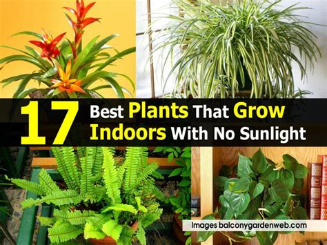 plants that don t need light 28 plants that don t need light 4 plants that don t need
