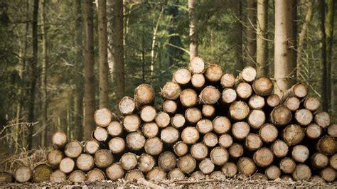 tree work spirit lake tree services