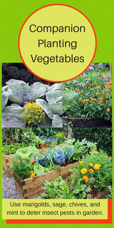 companion flowers for vegetable garden companion planting of vegetables