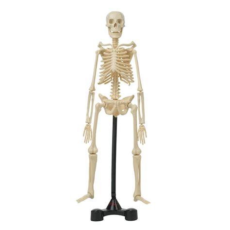 Hamleys Bones Skeleton Model Kit   £15.00   Hamleys for