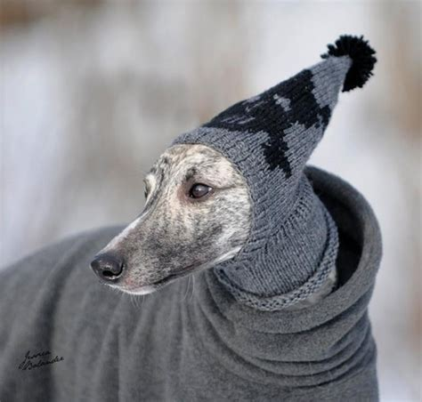 knitting for greyhounds greyhound sweater cool photos