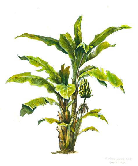 best tree images banana tree image clipart best
