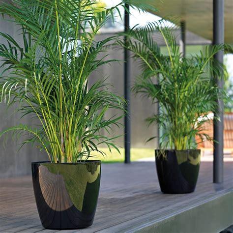 plantes d ext 233 rieur en pot sans entretien pivoine etc
