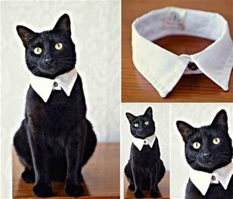 ideas black cat こんな首輪が欲しかった