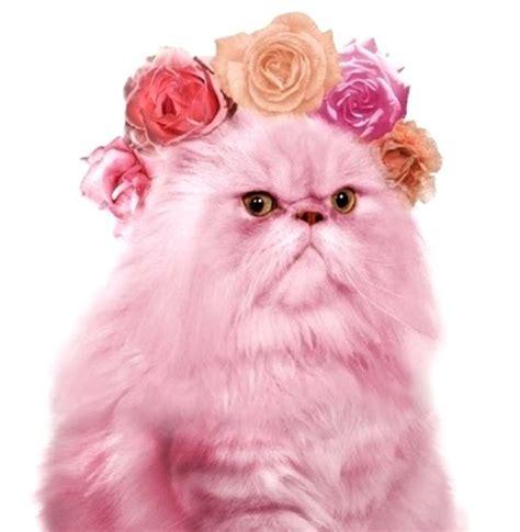 pink cat glitter cat pet pictures cat stuff and prettiest cat