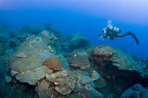 flower gardens diving diving the flower garden banks cruisers sailing photo