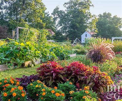 the vegetable garden vegetable gardens that look great