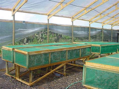 cria de caracoles en casa criar caracoles es negocio o p 233 rdida de tiempo criadero