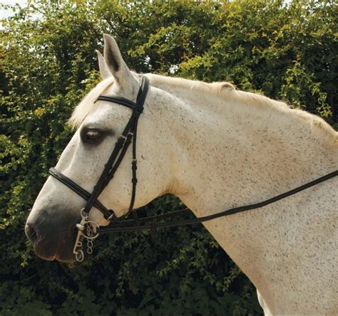 german rubber sts rhinegold elegance german leather bridle fast tack direct