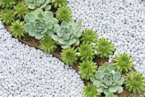 everything you need to know about succulents mnn