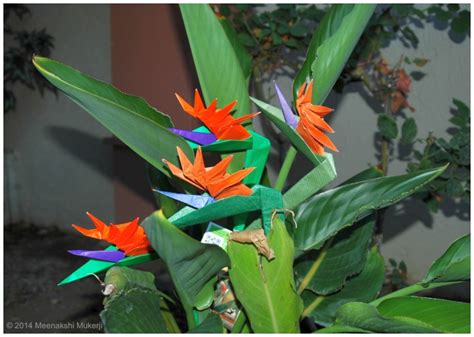 origami bird of paradise flower my single sheet designs