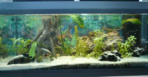 d 233 coration aquarium belgique