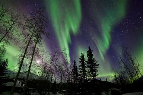 northern lights tree farm northern lights trees 28 images northern lights with