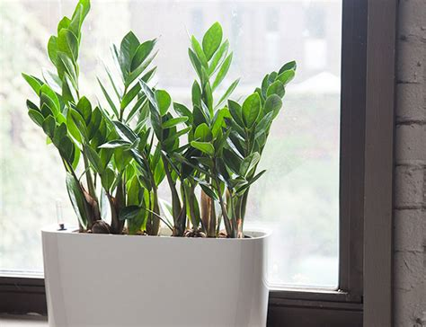 inside house plants 10 best indoor plants for gear patrol