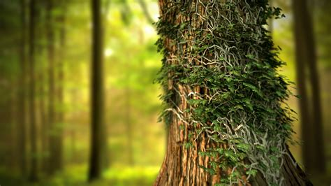 hd tree wallpaper tree hd wallpapers