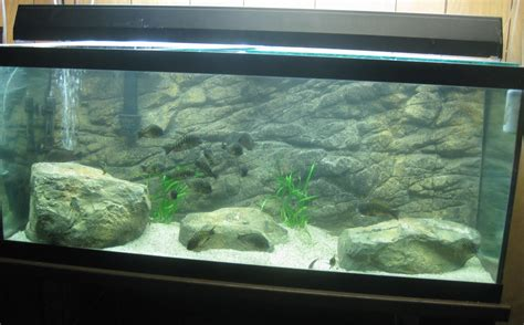 aquarium 3d background 3d gun image 3d aquarium backgrounds 2017 fish tank maintenance