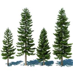 pinery trees 3d pine tree