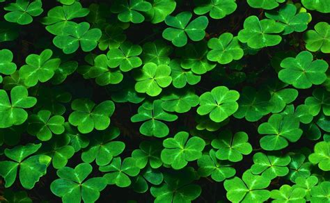 for march shamrocks wallpapers wallpaper cave