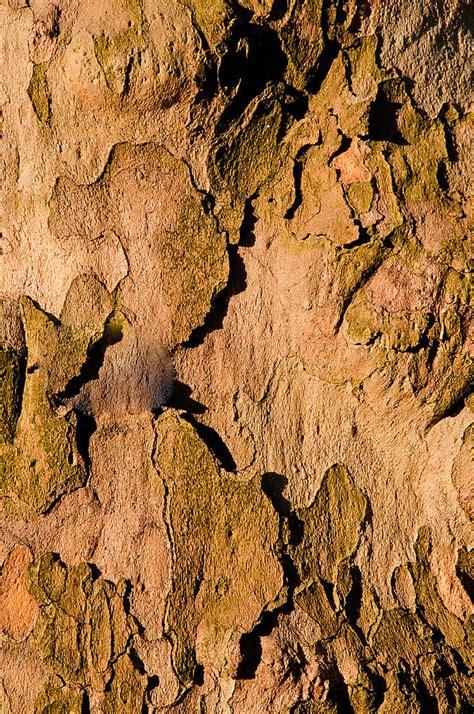 oak tree woodworking wood grain oak tree photograph by xavier cardell