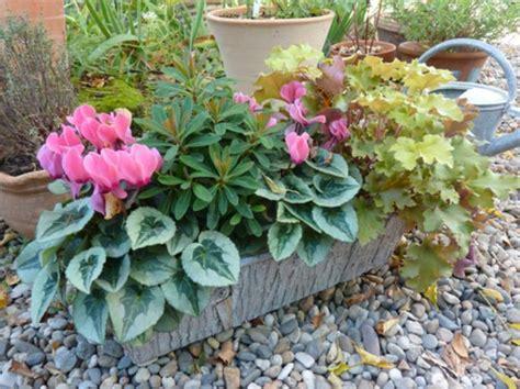 choisir une plante pour jardini 232 re quelques id 233 es et astuces archzine fr