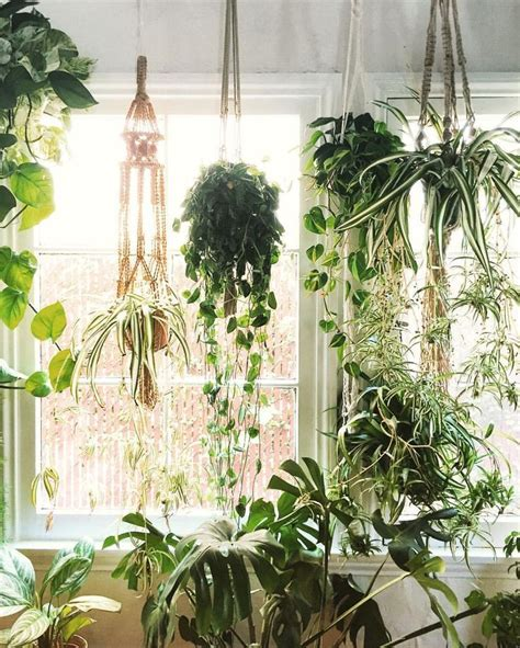 hanging plant 25 best ideas about indoor hanging plants on