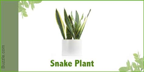 plants that don t need light dress up your home with these indoor plants that don t