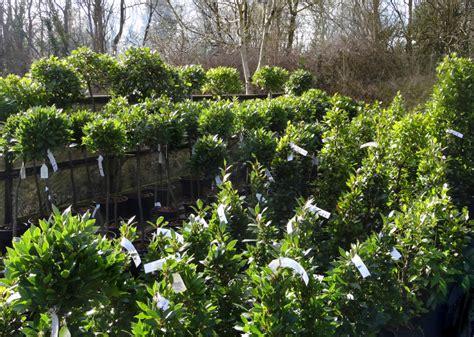 Garten Pflanzen Womit Düngen by D 252 Nger F 252 R Lorbeer 187 Wie Viel Wann Und Womit D 252 Ngen