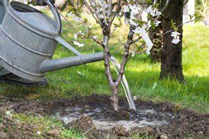 Garten Gestalten Obstbäume by Obstb 228 Ume Pflanzen 2 Tipps