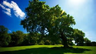 hd tree wallpapers beautiful cool wallpapers